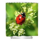 Raindrops On Ladybug Shower Curtain