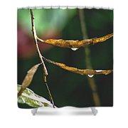 Raindrops On Leaf 3 Shower Curtain