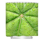 Raindrops On Leaf Shower Curtain