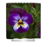 Raindrops On Pansies Shower Curtain