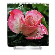 Raindrops On Pink Rose Shower Curtain