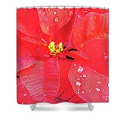 Raindrops On Red Shower Curtain