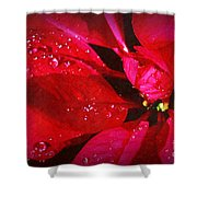 Raindrops On Red Poinsettia Shower Curtain