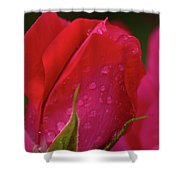 Raindrops On Roses Shower Curtain by Valeria Donaldson