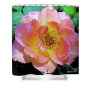 Raindrops On The Pink Rose Shower Curtain
