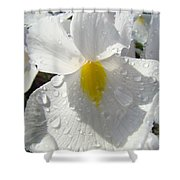 Raindrops On White Irises Flowers Sunlit Baslee Troutman Shower Curtain