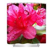 Raindrops Red Azaleas Art Prints Water Drops Azalea Flowers Shower Curtain