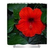 Rainforest Beauty Shower Curtain