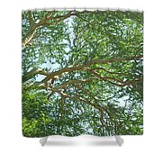 Rainforest Canopy Shower Curtain