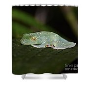 Rainforest Detail.. Shower Curtain