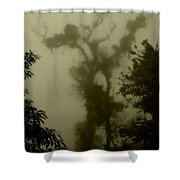 Rainforest IIi  Shower Curtain