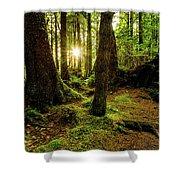Rainforest Path Shower Curtain