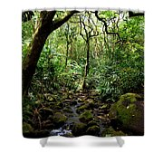 Rainforest Stream Shower Curtain