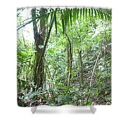 Rainforest Trees Shower Curtain
