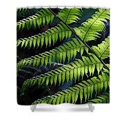 Rainforest Wonder Shower Curtain