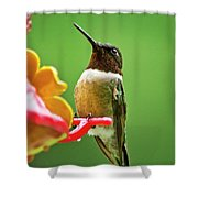 Rainy Day Hummingbird Shower Curtain