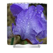 Rainy Day Iris Shower Curtain