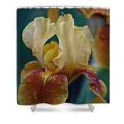 Rainy Iris Shower Curtain