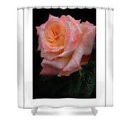 Rainy Rose In Macro Poster Shower Curtain