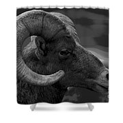 Ram Shower Curtain by Barbara Schultheis