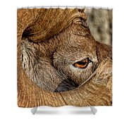 Ram Detail Shower Curtain