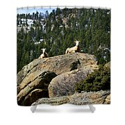 Ram On The Watch Shower Curtain