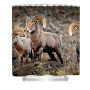 Ram Rock Mountain At Dawn Shower Curtain
