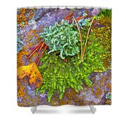 Rambouillet Forest Lichens Shower Curtain