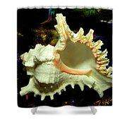 Rams Horn Seashell Shower Curtain