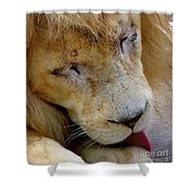 Ramses Shower Curtain