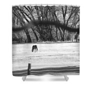 Ranch Horse In The Fields Shower Curtain