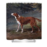 Ranger A Setter The Property Of Elizabeth Gray Shower Curtain