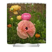 Ranunculus 4 Shower Curtain
