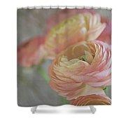 Ranunculus - 6219 Shower Curtain