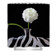 Ranunculus In Black And Whie Vase Shower Curtain