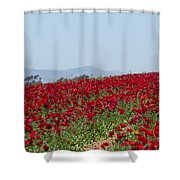 Ranunculus Red Shower Curtain