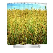 Rapeseed Shower Curtain