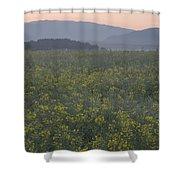 Rapeseed Dawn Shower Curtain