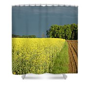 Rapeseed Field With Storm Clouds In Background Shower Curtain