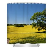 Rapeseed Field,west Sussex, England  Shower Curtain
