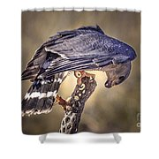 Raptor 21 Shower Curtain