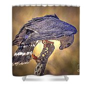 Raptor 22 Shower Curtain