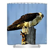 Raptor's Stare Shower Curtain