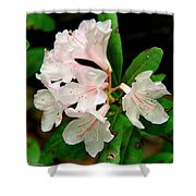 Rare Florida Beauty - Chapmans Rhododendron Shower Curtain