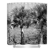 Rare Palm Trees Curacao Shower Curtain