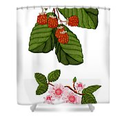 Raspberries And Raspberry Blossoms Shower Curtain