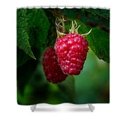 Raspberry 1 Shower Curtain