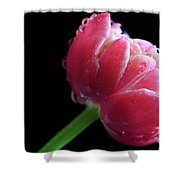 Raspberry Tulip Shower Curtain by Tracy Hall