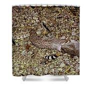 Rattlesnake Devouring Rabbit Shower Curtain