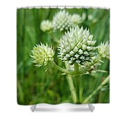Rattlesnake Master Shower Curtain